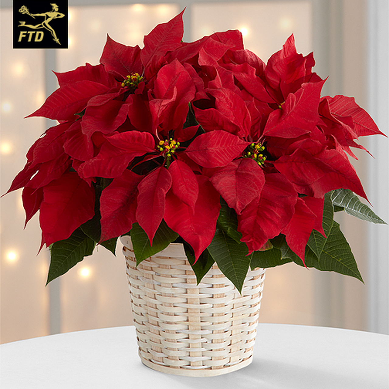Red Poinsettia by The Flowerloft